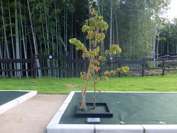 山口県岩国市の樹木供養・広島県広島市の樹木供養
